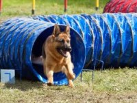 Vabimo vas k vpisu na 1 mesečni tečaj šolanja psov