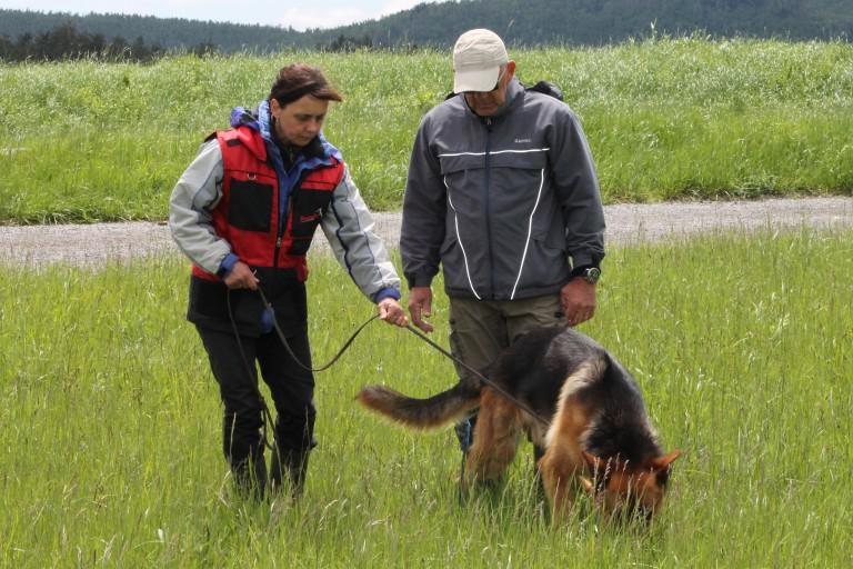 Med karanteno psa primerno zaposlite